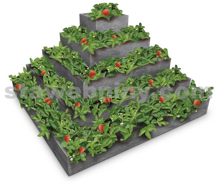 TRANSFORM Pyramida na jahody 2*2*1m pětipatrová